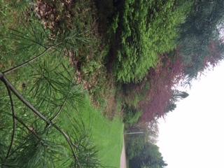 051314 evergreen shrubs of doom 2.jpeg