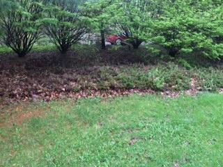 051314 evergreen shrubs of doom.jpeg