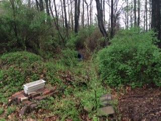 051314 SW corner compost area 2.jpeg