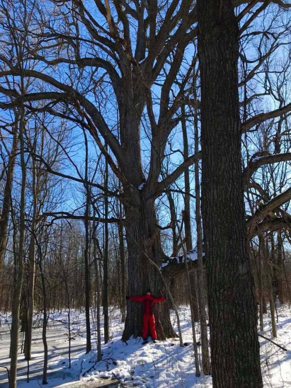 Bur Oak 3.jpg