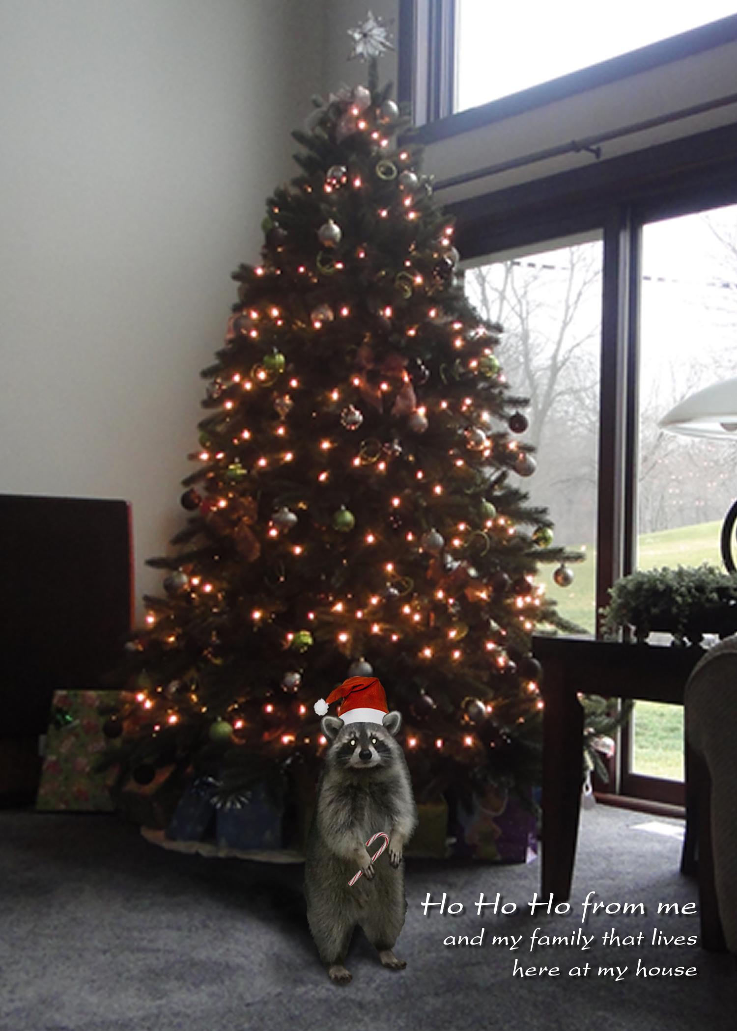 Christmas2012.jpg