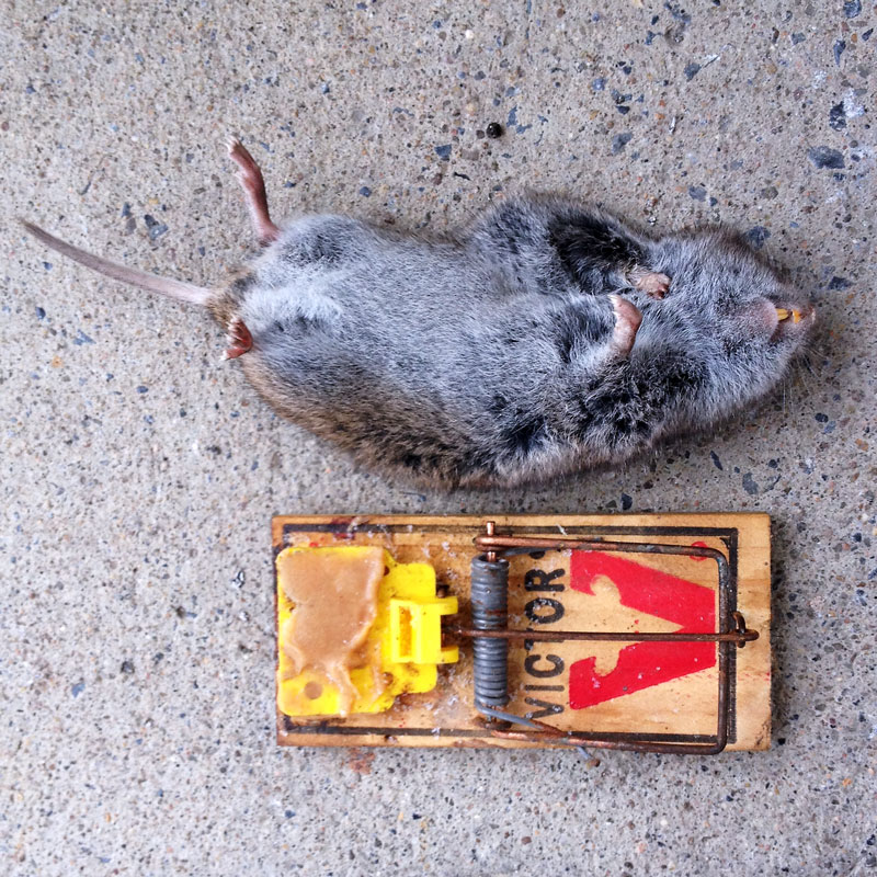 Click image for larger version.  Name:Critter.jpg Views:28 Size:237.5 KB ID:25525