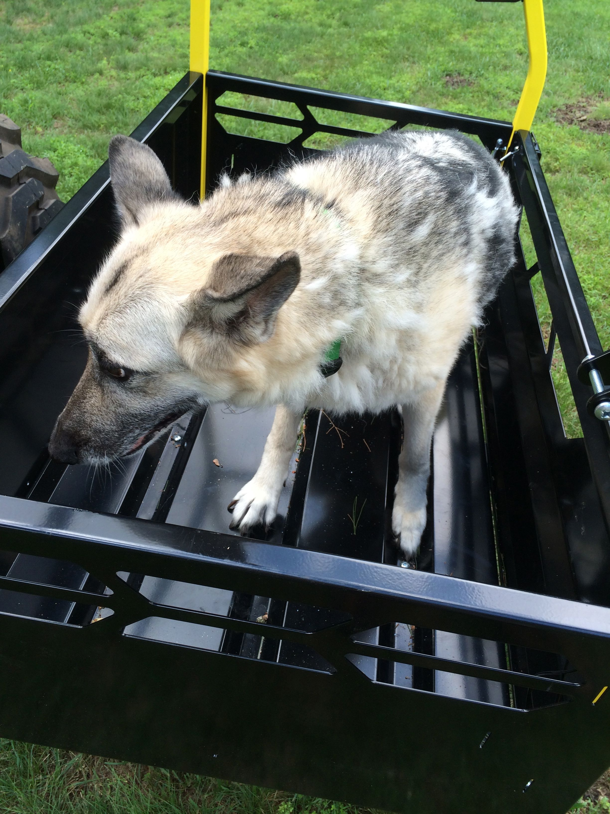 Click image for larger version.  Name:dog.jpg Views:35 Size:1.00 MB ID:29245