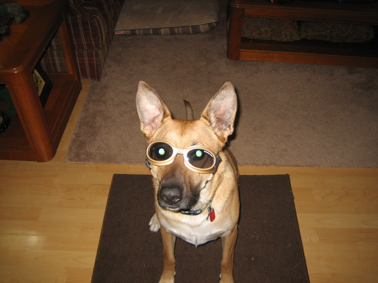 Click image for larger version.  Name:Dynamite and Doggles 003.JPG Views:77 Size:488.7 KB ID:17537