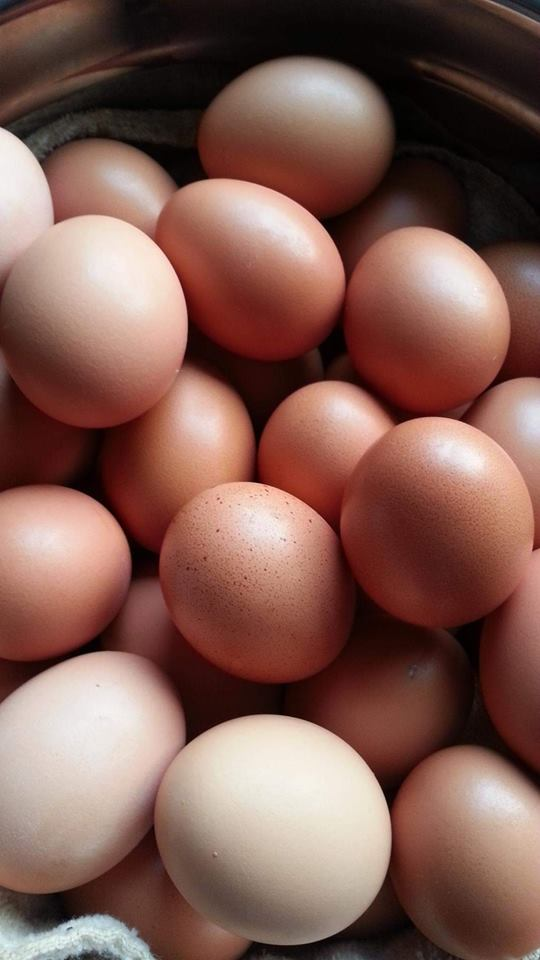 Click image for larger version.  Name:eggs.jpg Views:6 Size:52.3 KB ID:683682