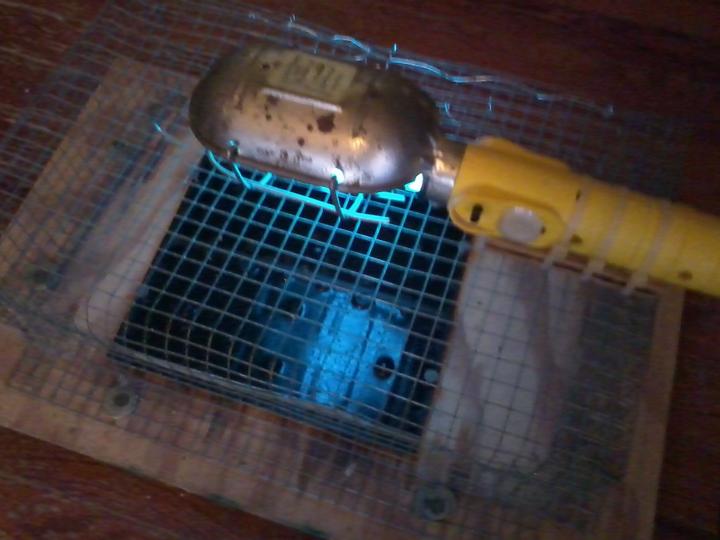 flea trap 2.jpg