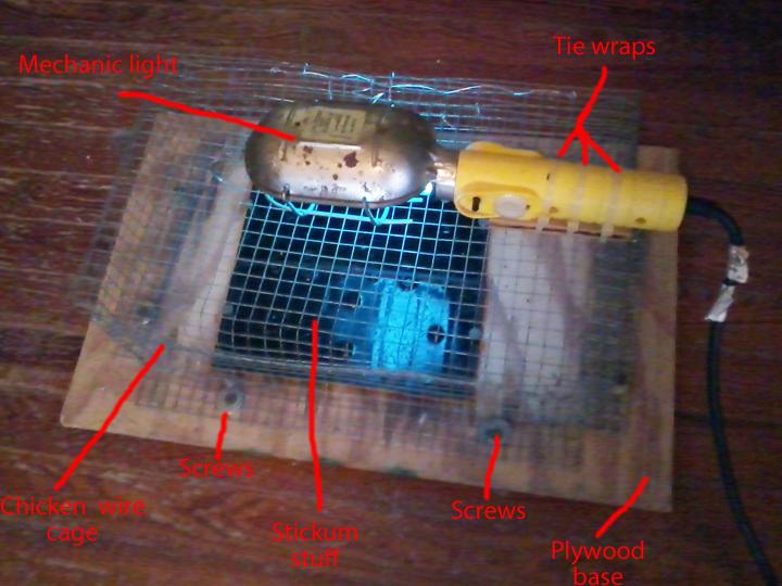 flea trap.jpg