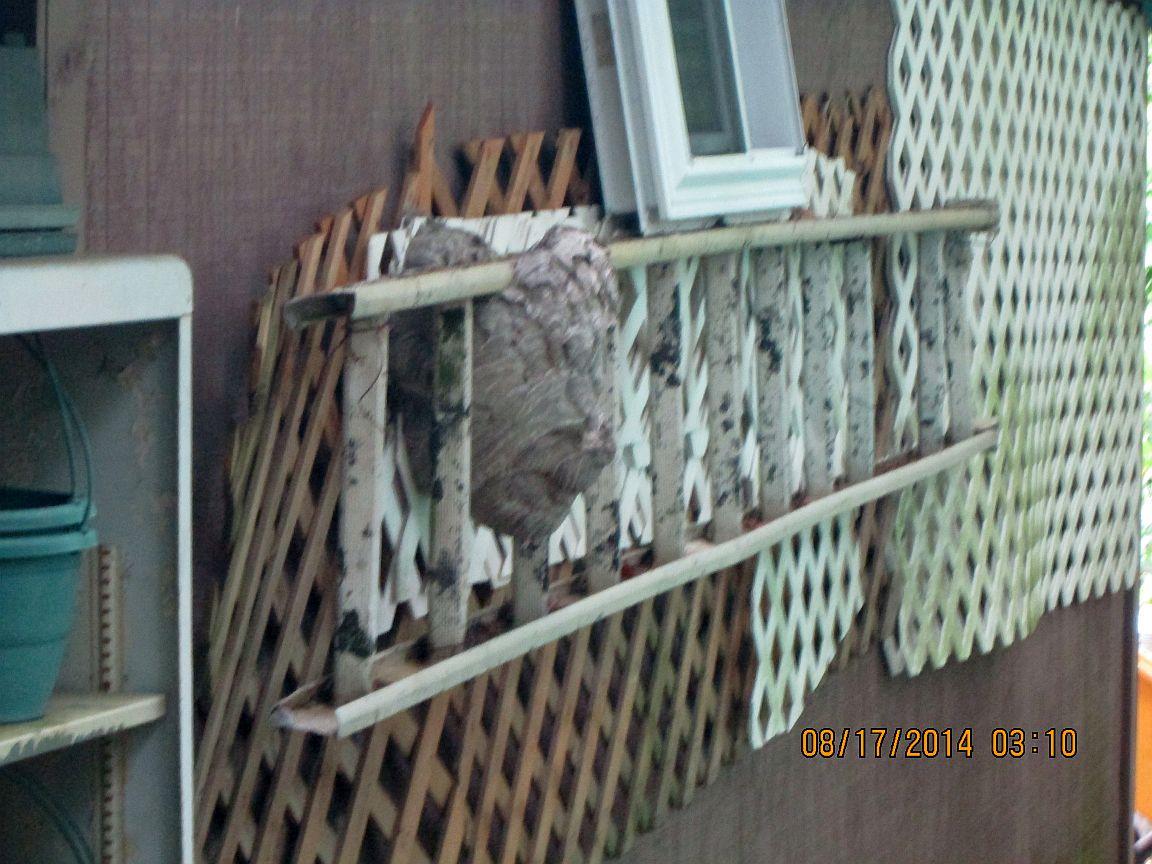 Hornets nest 8-14.jpg