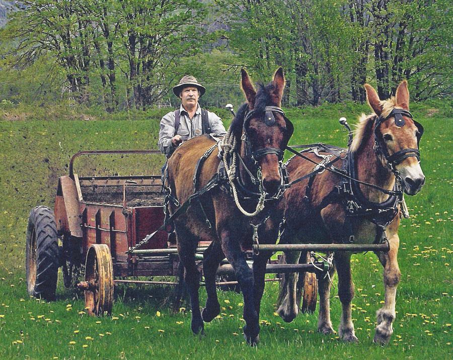 Horse cart with power imp.jpg
