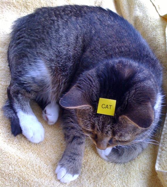 labeled_cat.jpg