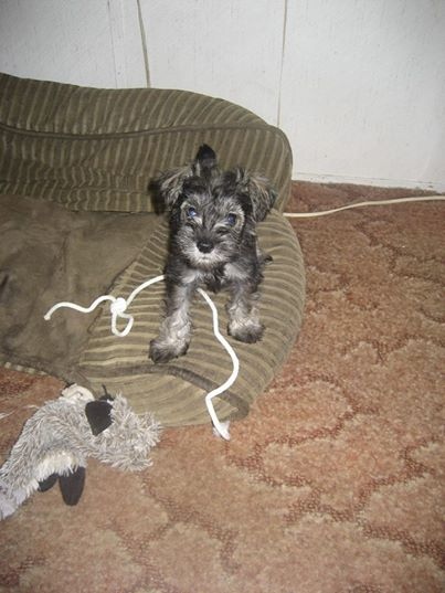 Lacy puppy photo.jpg