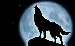 Old Lone Wolf.jpg