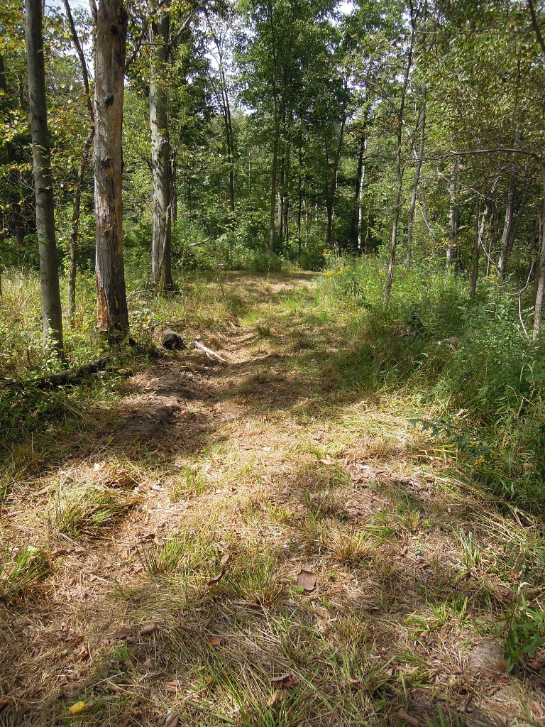 Click image for larger version.  Name:Ruts n Woods.jpg Views:5 Size:914.5 KB ID:11257