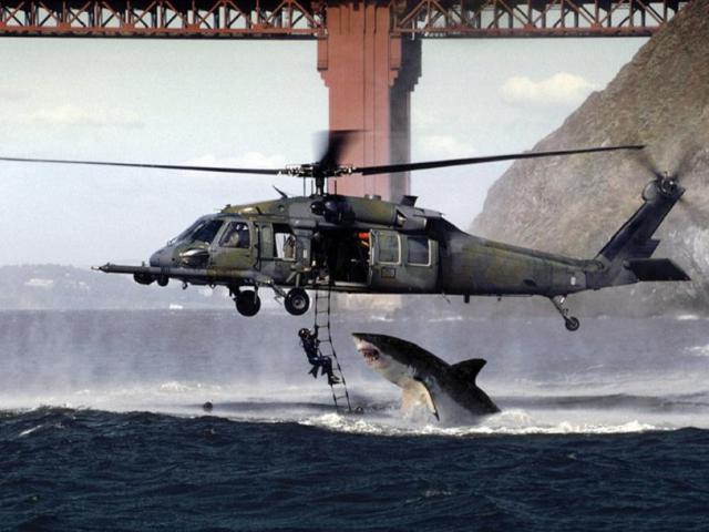 Click image for larger version.  Name:shark_attack.jpg Views:34 Size:43.5 KB ID:97825