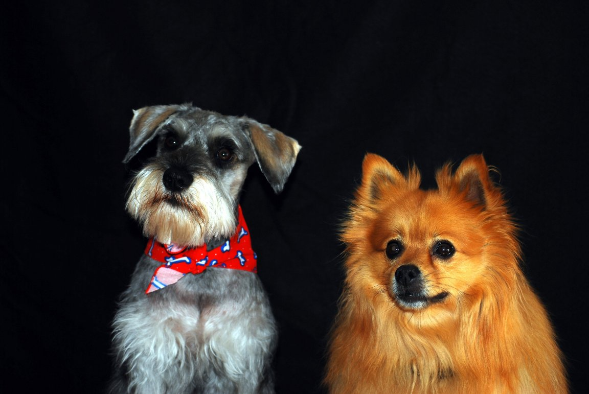 Click image for larger version.  Name:Tucker and Gizmo_1.jpg Views:27 Size:106.7 KB ID:27850